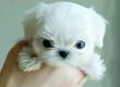 Doggie-13069166291308278291_1_e2086cd5