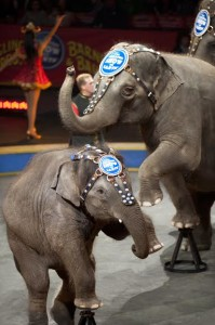 elephants-Ringling Bros. circus-unnamed