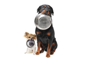 Dogs-Bowls in mouth-unnamed (1)