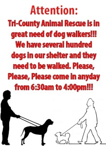 Tri-County Animal-Dog Walkers-95ccba19-1e31-4227-a538-09caed6db9b6
